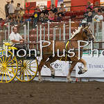 18Virden Draft Horse (73 of 100)