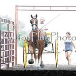 18Virden Draft Horse (8 of 100)