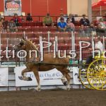 18Virden Draft Horse (98 of 100)