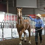 18Virden Draft Horse (46 of 100)