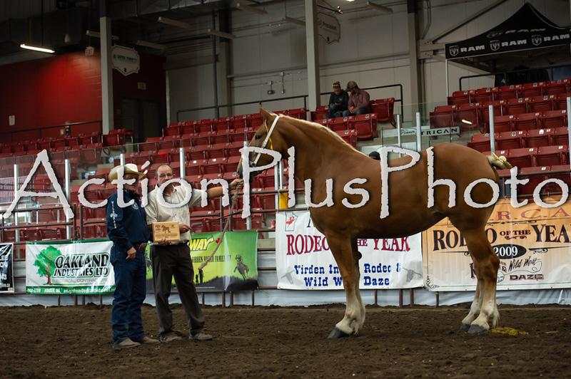 18Virden Draft Horse (62 of 100)