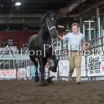 18Virden Draft Horse (59 of 100)