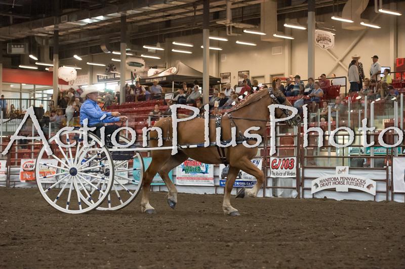 18Virden Draft Horse (70 of 100)
