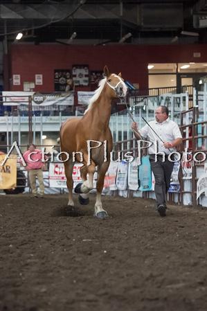 18Virden Draft Horse (53 of 100)