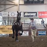 18Virden Draft Horse (27 of 100)