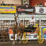 18Virden Draft Horse (100 of 100)