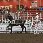 18Virden Draft Horse (64 of 100)
