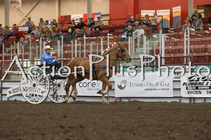 18Virden Draft Horse (89 of 100)