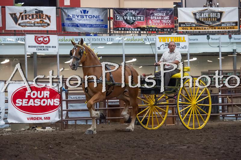 18Virden Draft Horse (9 of 100)