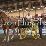 18Virden Draft Horse (94 of 100)