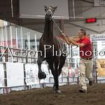 18Virden Draft Horse (49 of 100)