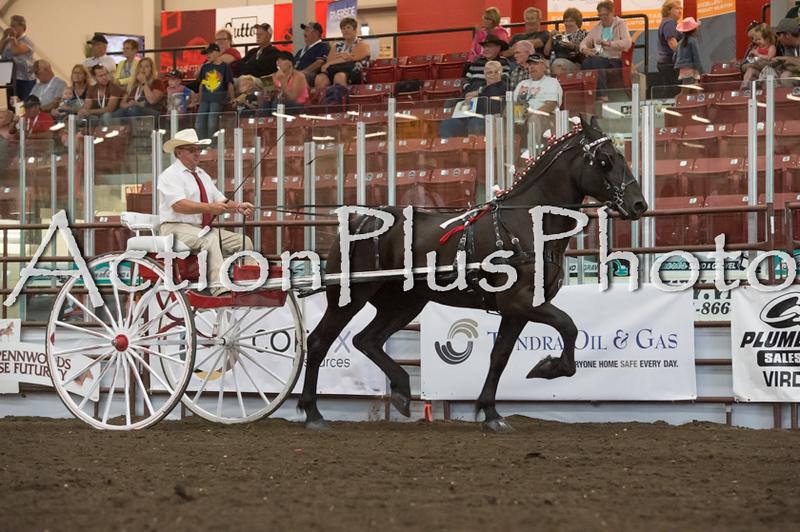 18Virden Draft Horse (83 of 100)