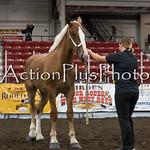 18Virden Draft Horse (39 of 100)
