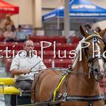 18Virden Draft Horse (10 of 100)