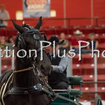 18Virden Draft Horse (14 of 100)