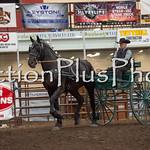 18Virden Draft Horse (13 of 100)