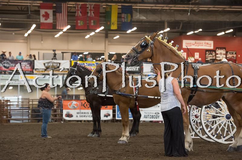 18Virden Draft Horse (90 of 100)