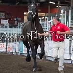 18Virden Draft Horse (52 of 100)