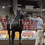 18Virden Draft Horse (40 of 100)