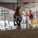 18Virden Draft Horse (48 of 100)