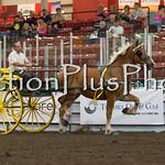 18Virden Draft Horse (74 of 100)
