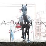 18Virden Draft Horse (5 of 100)