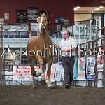 18Virden Draft Horse (56 of 100)
