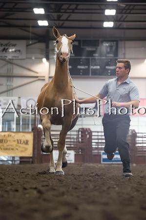 18Virden Draft Horse (31 of 100)