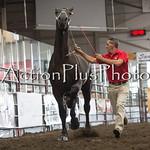 18Virden Draft Horse (50 of 100)