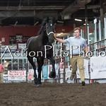 18Virden Draft Horse (58 of 100)