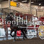 18Virden Draft Horse (6 of 100)