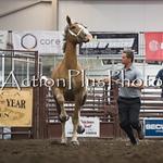 18Virden Draft Horse (29 of 100)
