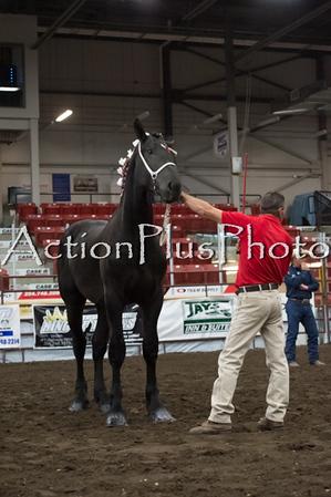 18Virden Draft Horse (38 of 100)