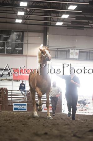 18Virden Draft Horse (26 of 100)