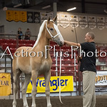 18Virden Draft Horse (35 of 100)
