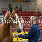 18Virden Draft Horse (32 of 100)