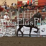 18Virden Draft Horse (82 of 100)