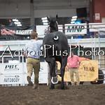 18Virden Draft Horse (60 of 100)