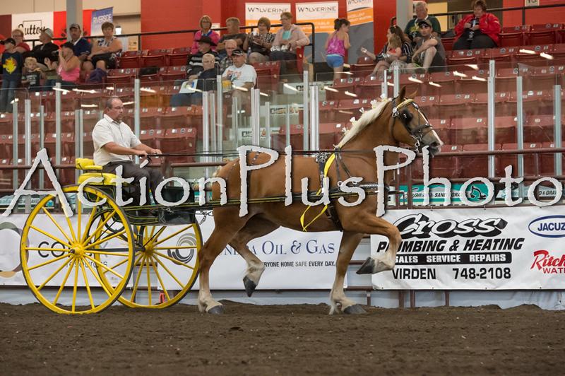 18Virden Draft Horse (75 of 100)