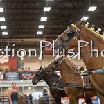 18Virden Draft Horse (91 of 100)