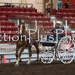 18Virden Draft Horse (2 of 100)