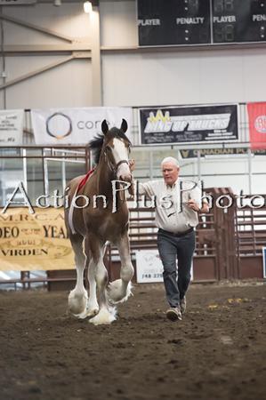 18Virden Draft Horse (16 of 100)