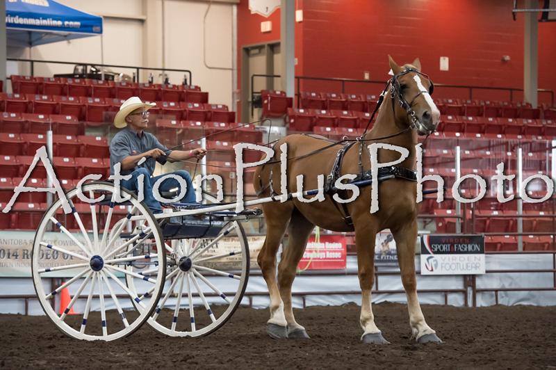 18Virden Draft Horse (3 of 100)