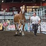 18Virden Draft Horse (54 of 100)