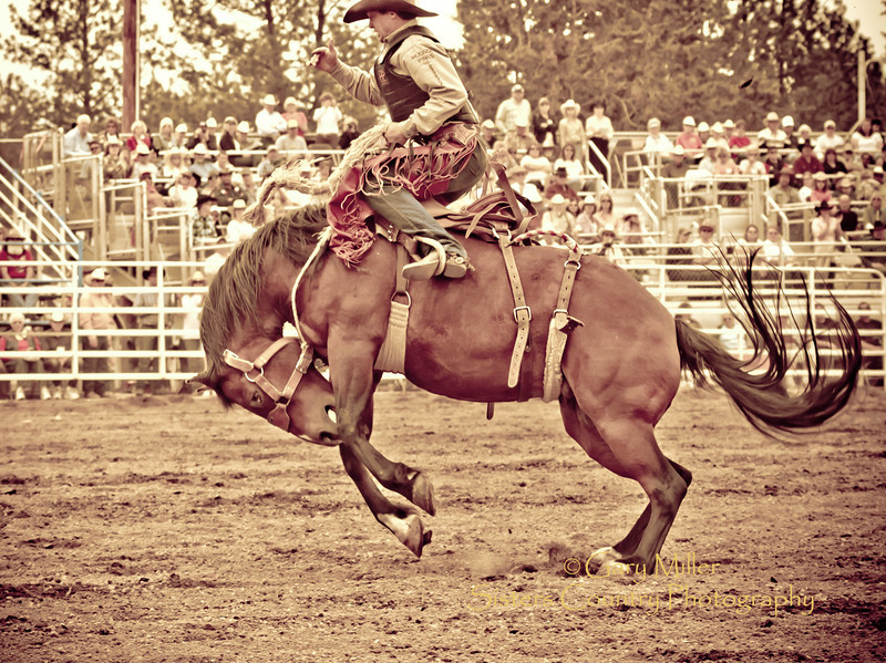 Cody Wright of Milford, Utah riding Saddle Bronc - 2011 Sisters Rodeo, Sisters Oregon - Photographer Gary Miller - Sisters Country Photography