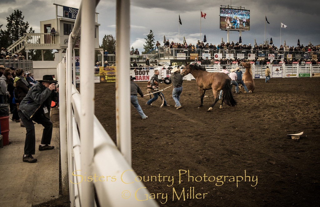 Team Bronc Riding action on Friday Night at the 2012 Sisters Rodeo -Sisters, Oregon - Gary N. Miller - Sisters Country Photography