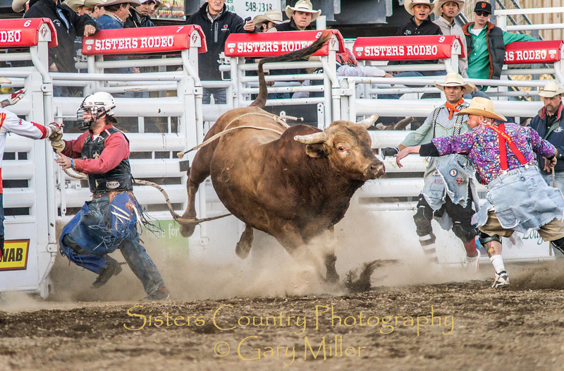 PRCA Xtreme Bulls night at the 2012 Sisters Rodeo - Sisters, OR - Gary N. Miller - Sisters Country Photography