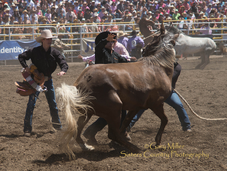 The Wild Horse Race at Sunday afternoon's performance of the 2013 Sisters Rodeo - Sisters, Oregon - Copyright © 2013 Gary N. Miller, Sisters Country Photography