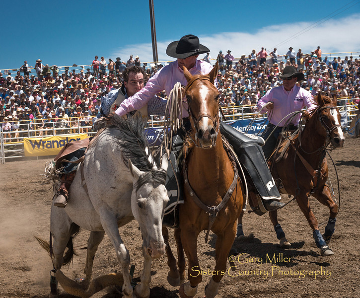 Ryan Grey of Cheney Washington rides to a score of 84 Sunday afternoon's performance of the 2013 Sisters Rodeo - Sisters, Oregon - Copyright © 2013 Gary N. Miller, Sisters Country Photography