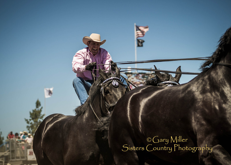 Jason Goodman and the Percheron Thunder team at Sunday afternoon's performance of the 2013 Sisters Rodeo - Sisters, Oregon - Copyright © 2013 Gary N. Miller, Sisters Country Photography